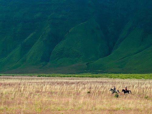 Baluran National Park, Situbondo